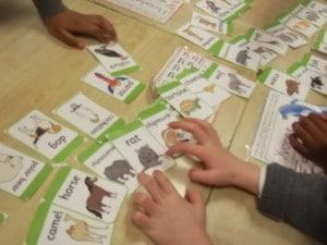 Comparing Animals